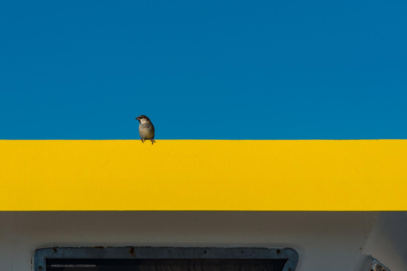 Il comandante del peschereccio giallo