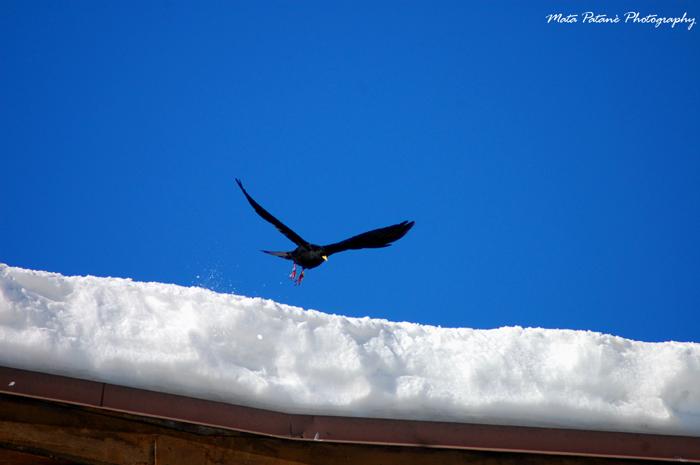 Il corvo e la neve