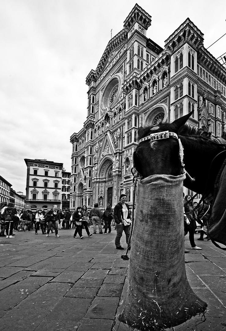 Il DUOMO E IL CAVALLO / THE DOME AND THE HORSE