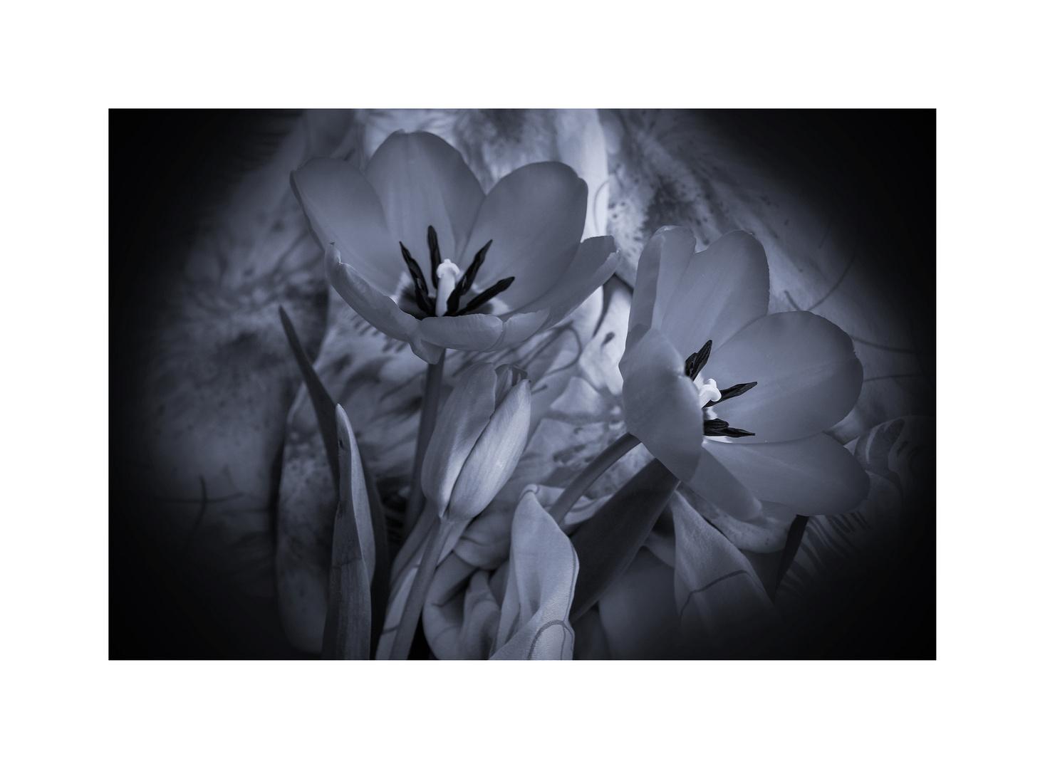 .il fascino dei fiori.....