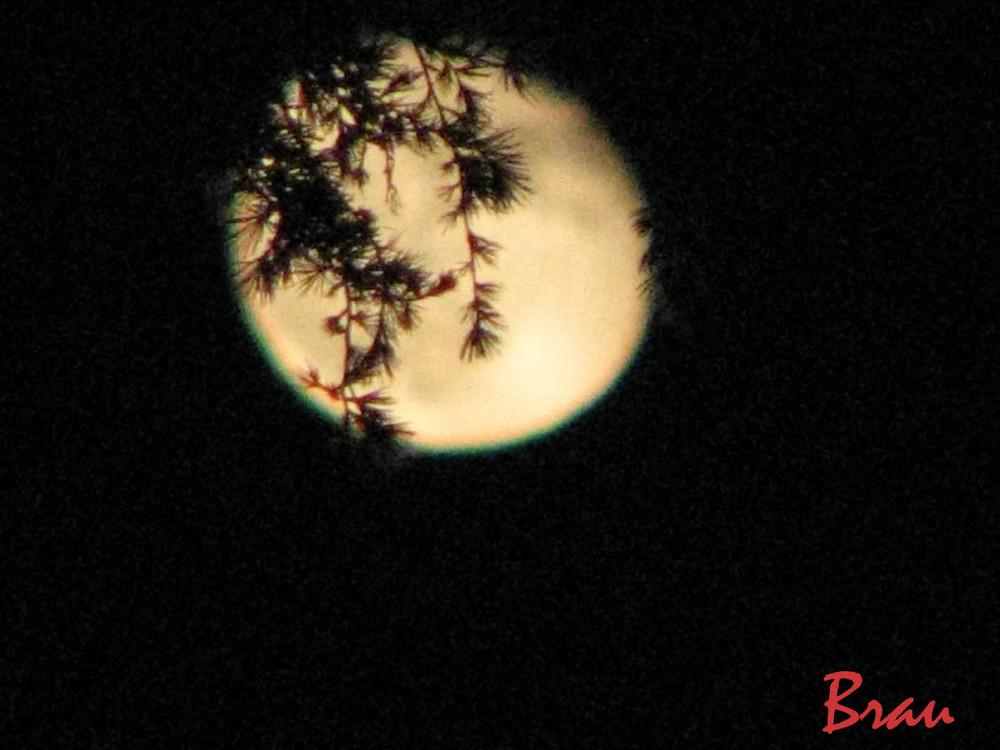 Il fascino di una notte di luna.