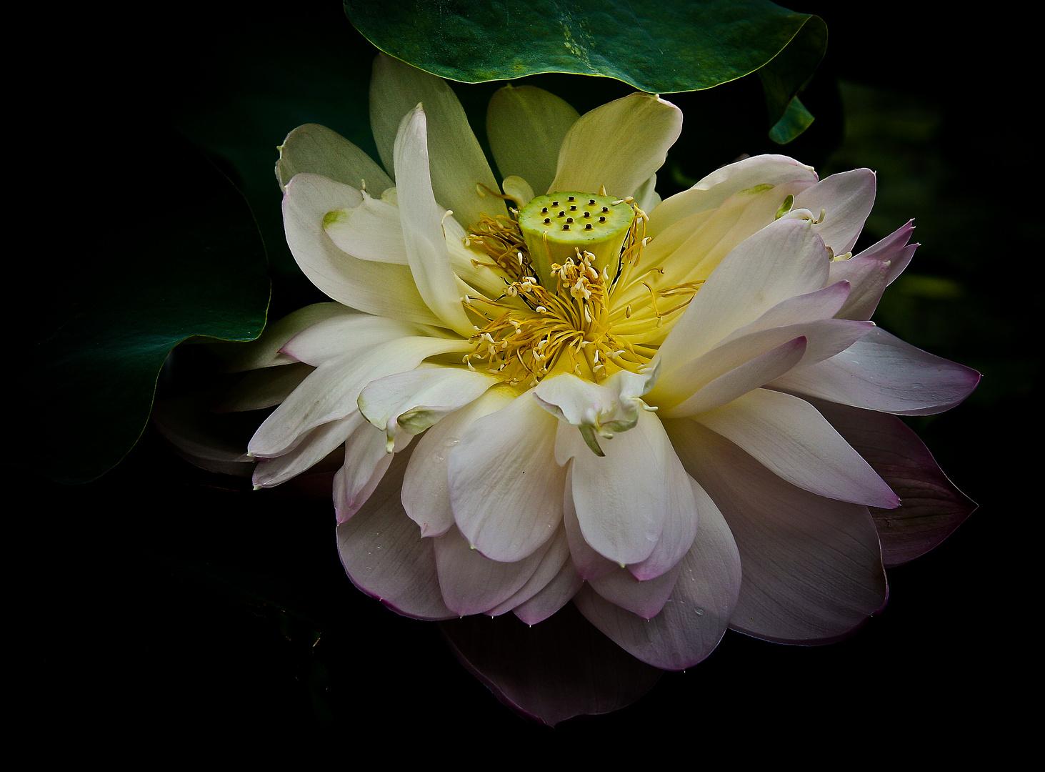 il fiore.....................