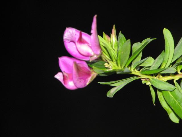 Il fiore.