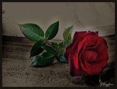 Il fiore della vita...una rosa.