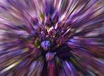 Il fiore è di colore viola (aglio)