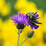 il fiore e l'insetto