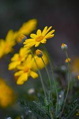 Il fiore giallo