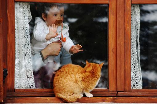 il gatto..........