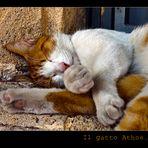 Il gatto Athos....