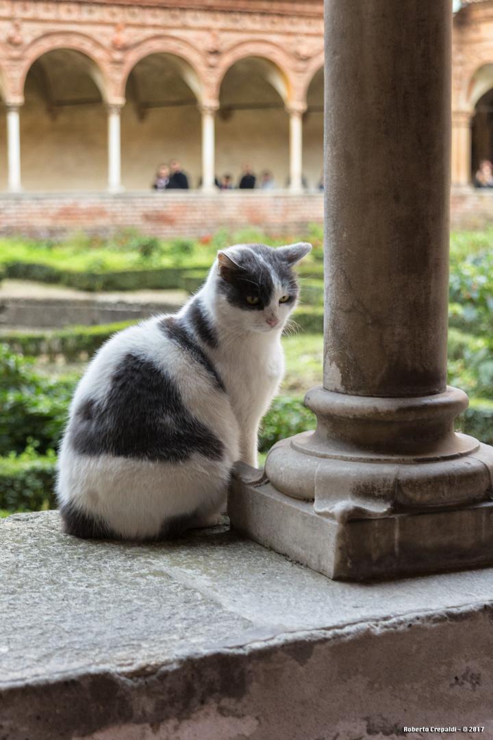 Il gatto del chiostro