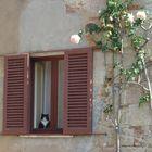 Il gatto di casa