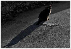 il gatto di halloween.....