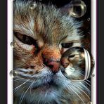 """"""" Il gatto e la bolla di sapone """""""