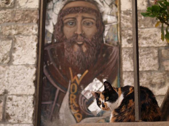 il gatto e san francesco