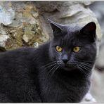 Il gatto Giulio....