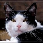 Il gatto Leo...