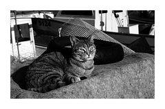 il gatto marinaio