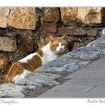 Il gatto Orazio....