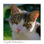 il gatto Pistacchio....