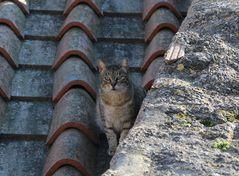 il gatto sui tetti di Roma...