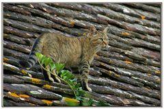 il gatto sul vecchio tetto ...