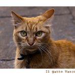 Il gatto Vasco...