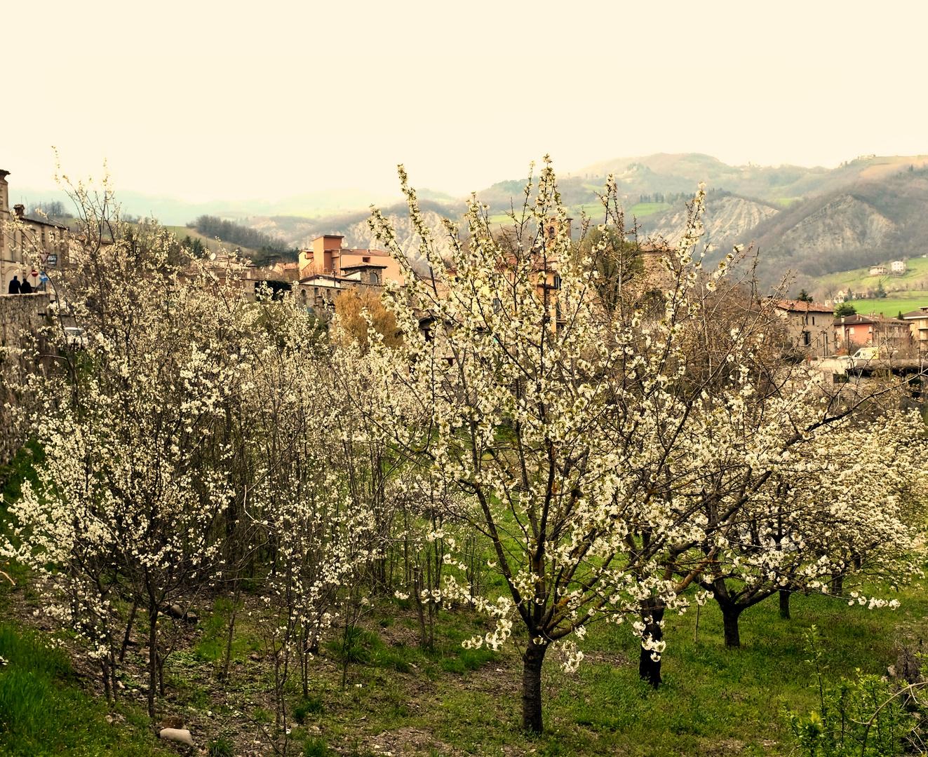 Il giardino dei ciliegi foto % immagini piante fiori e funghi