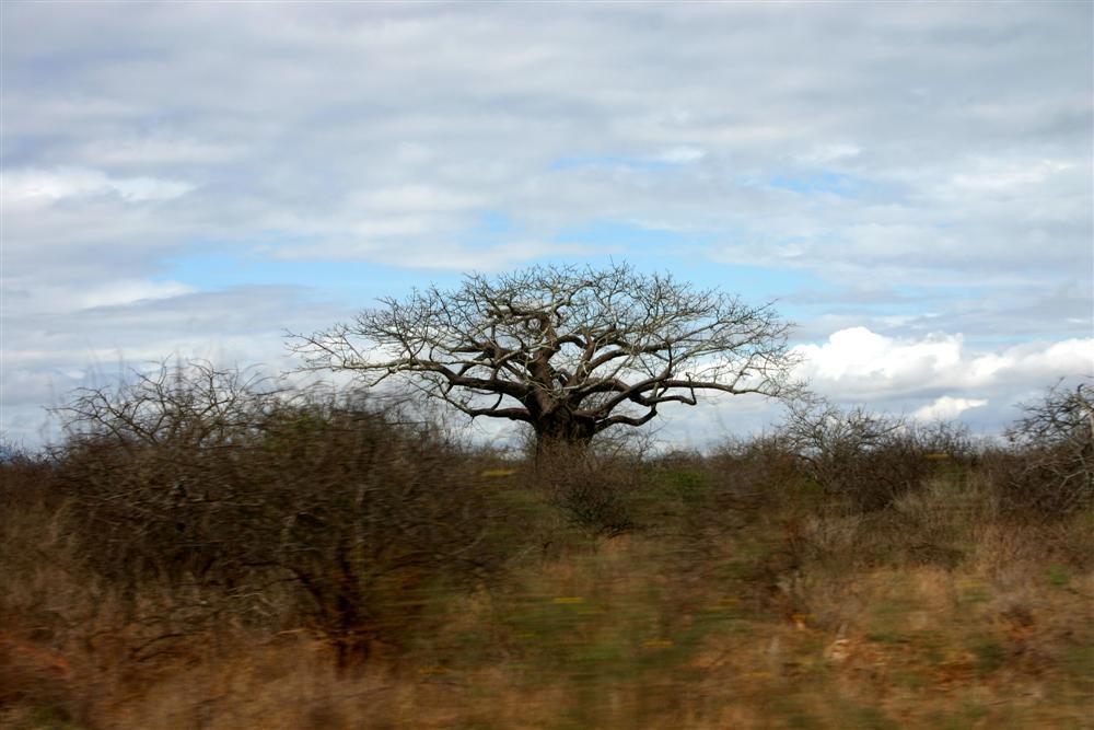 Il gigante immobile (Kenya)