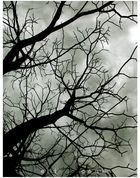 il grigio dell'albero