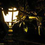Il Lampione