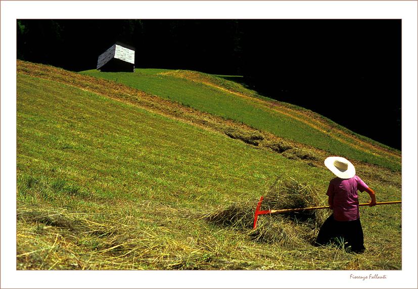 Il lavoro nei campi