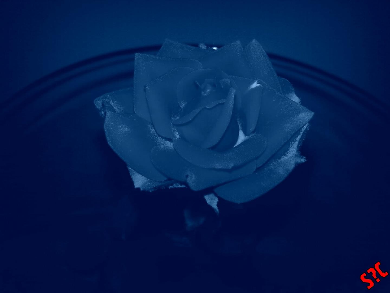 Il letto e' come una rosa se non si dorme si riposa...quella notte si riposava