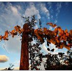 ...il mio autunno