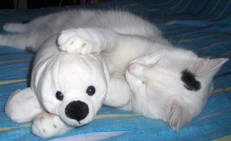 il mio gatto dormiglione