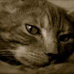 Il Mio Gatto Romeo