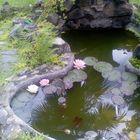 il mio laghetto