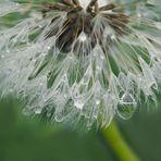 """il """"..miracolo...."""" dopo la pioggia....."""
