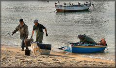 Il mondo del lavoro..scarica di pesce.