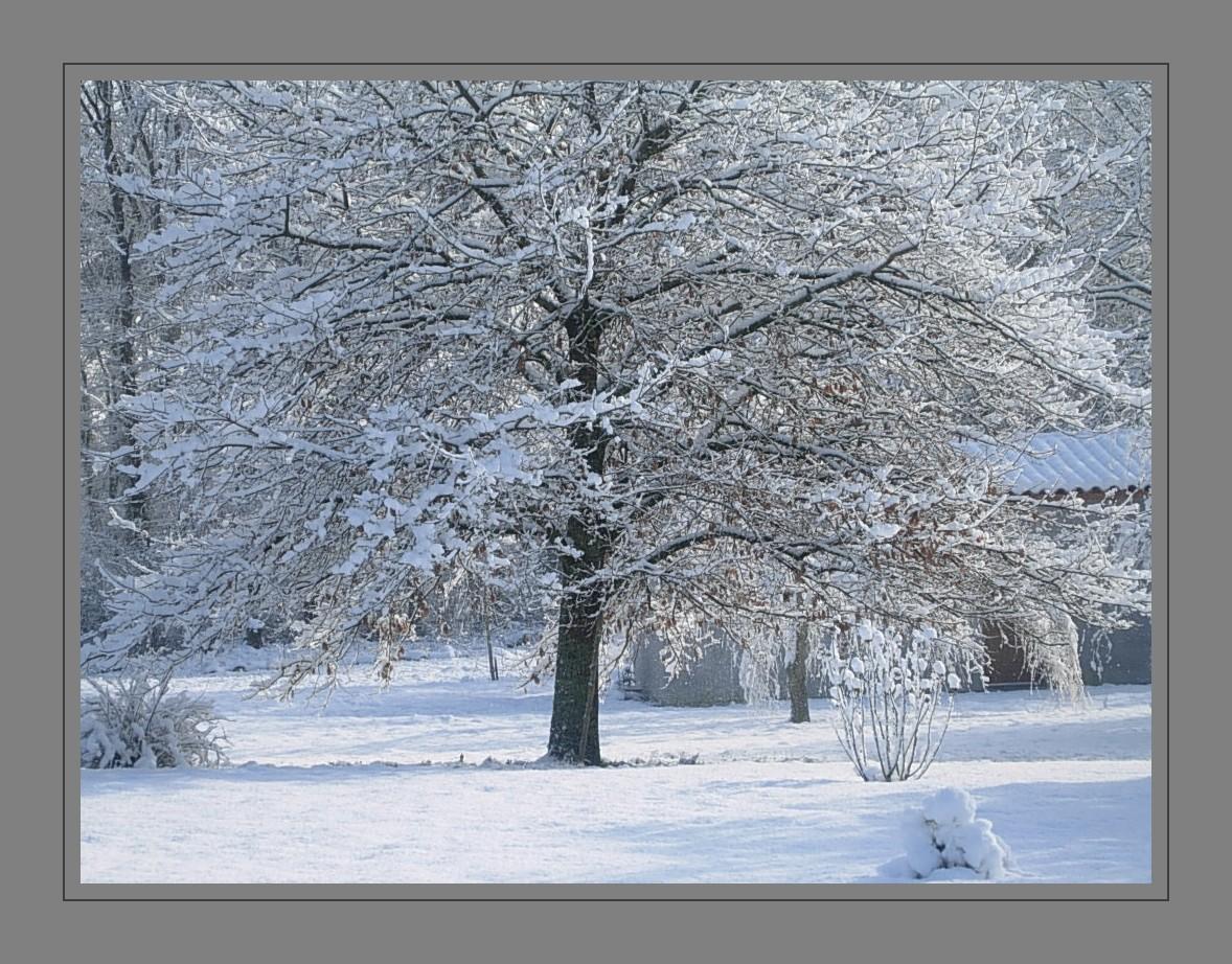il neige... c'est beau!