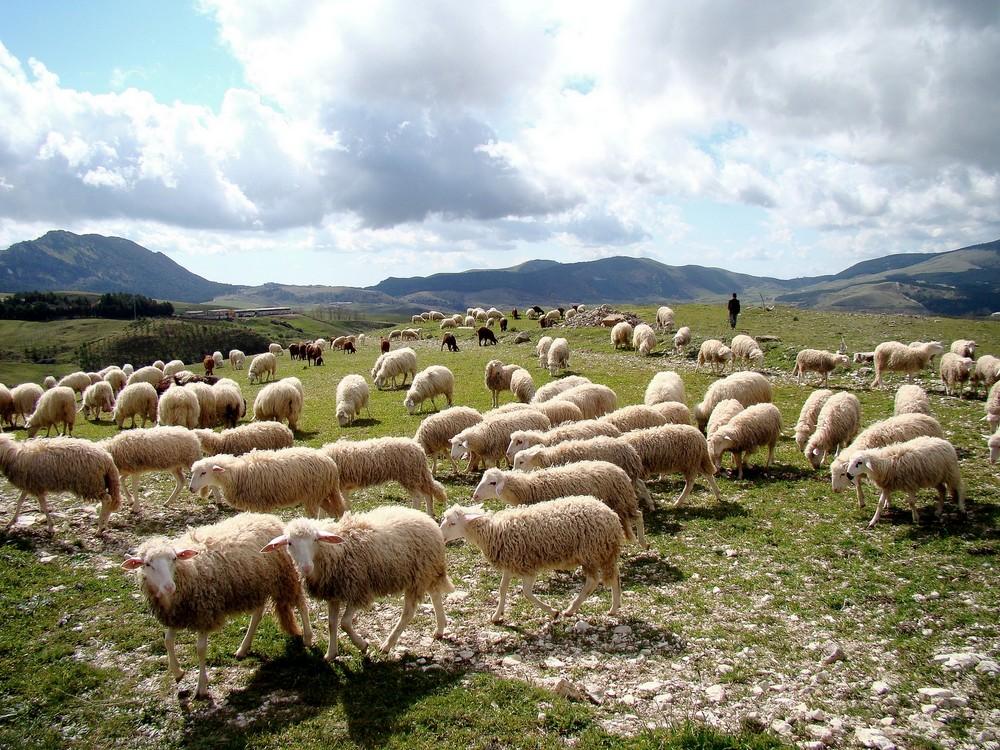 Il pastore di Maurizio Cutrano