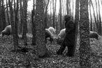 Il Pastore e le sue pecore