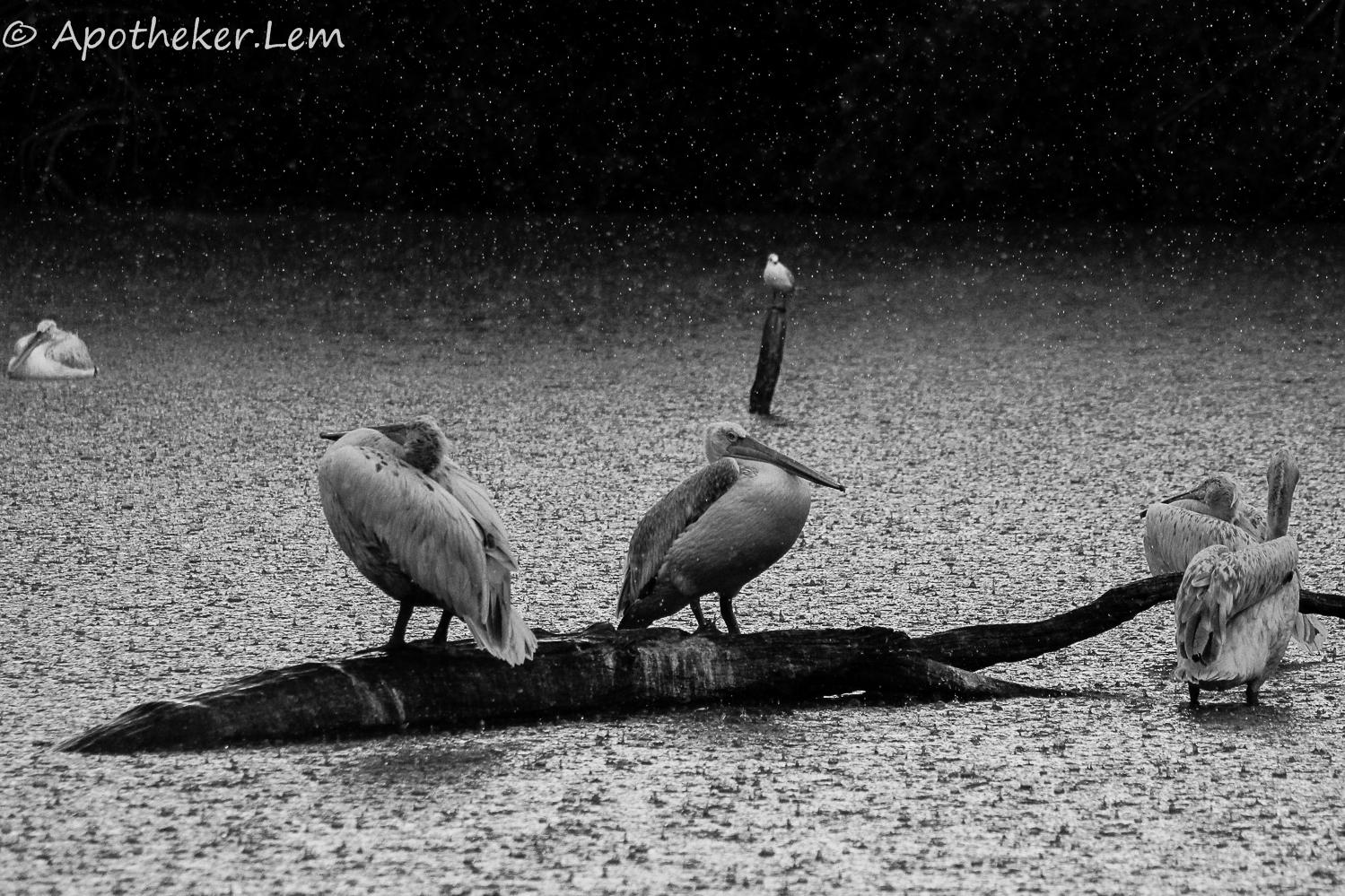 il pleut... photo et image | animaux, zoo et animaux en captivité ...