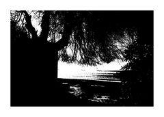 Il posto all'ombra