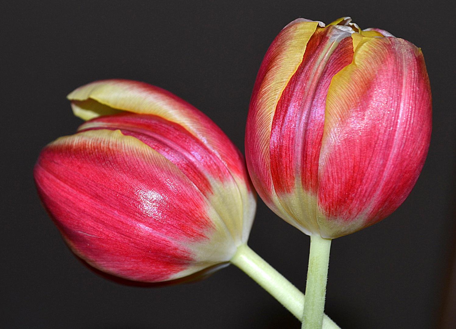 Il profumato e  colorato abbraccio