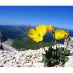 Il punto di vista dei fiori...