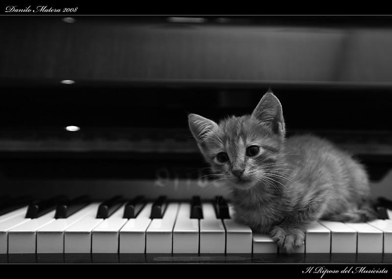 Il riposo del musicista