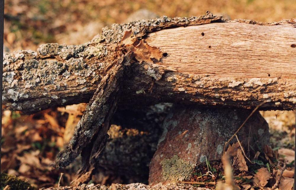 Il riposo del vecchio tronco