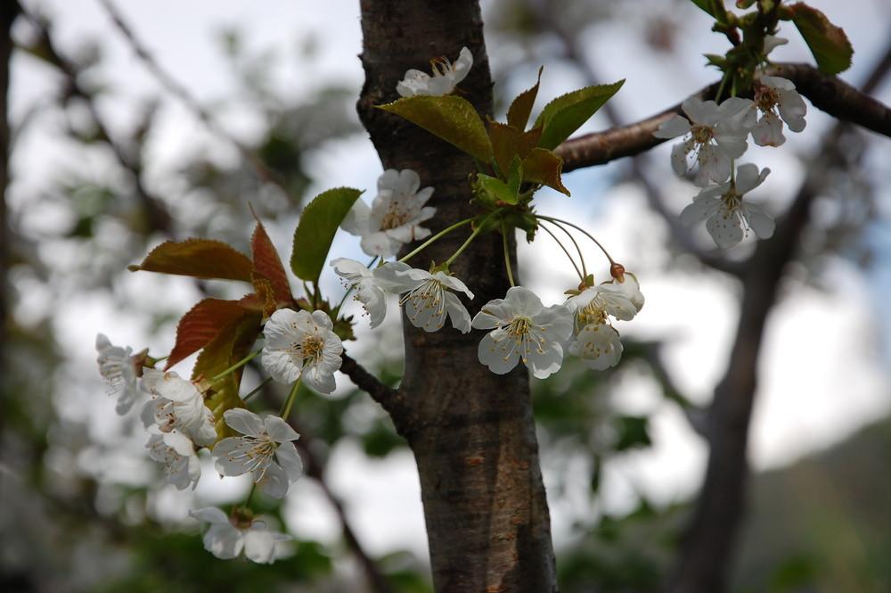 il ritorno della primavera