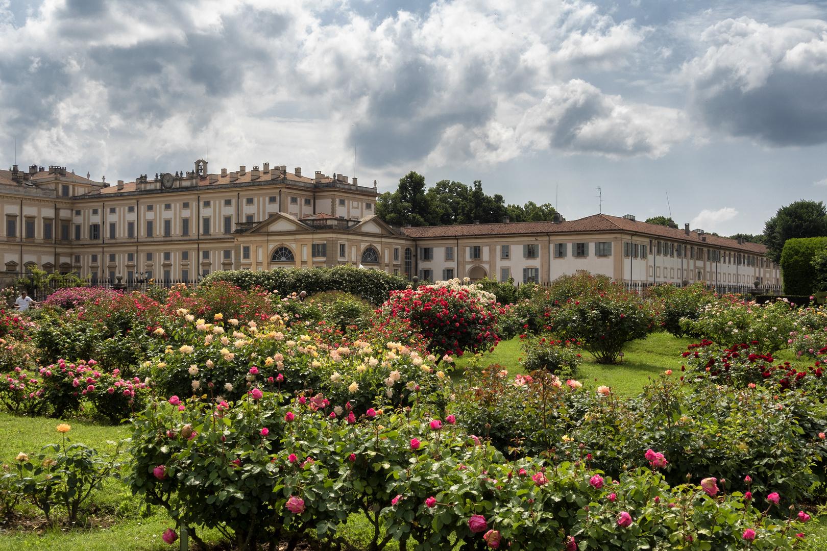Il roseto della Villa Reale di Monza