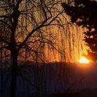 Il Salice al tramonto
